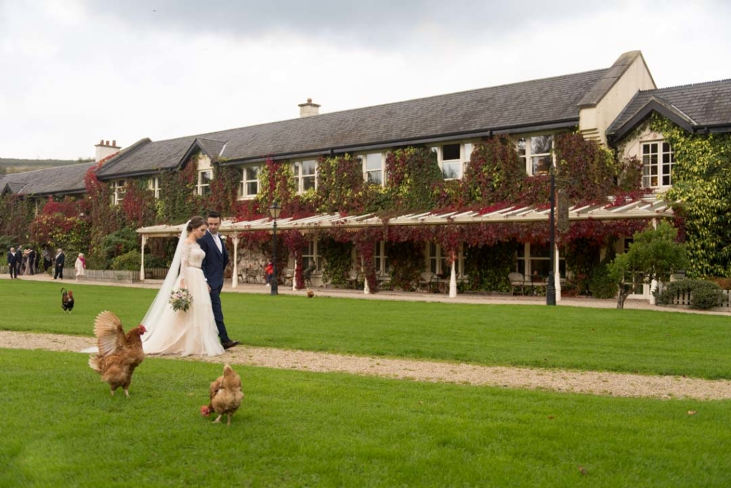 Bride and groom walking on the grounds of the Brooklodge Hotel surrounded by hens